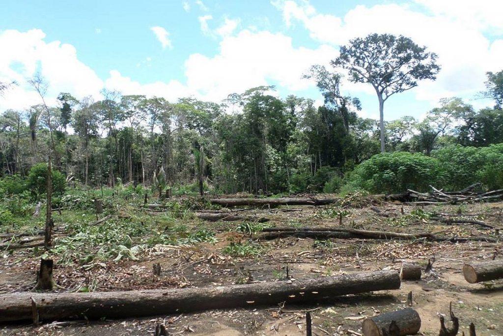 Polícia Militar flagra desmatamento na Reserva Extrativista Jaci Paraná e denuncia invasão. Imagem feita em março de 2016. Foto: Batalhão de Polícia Militar Ambiental/RO/Facebook.