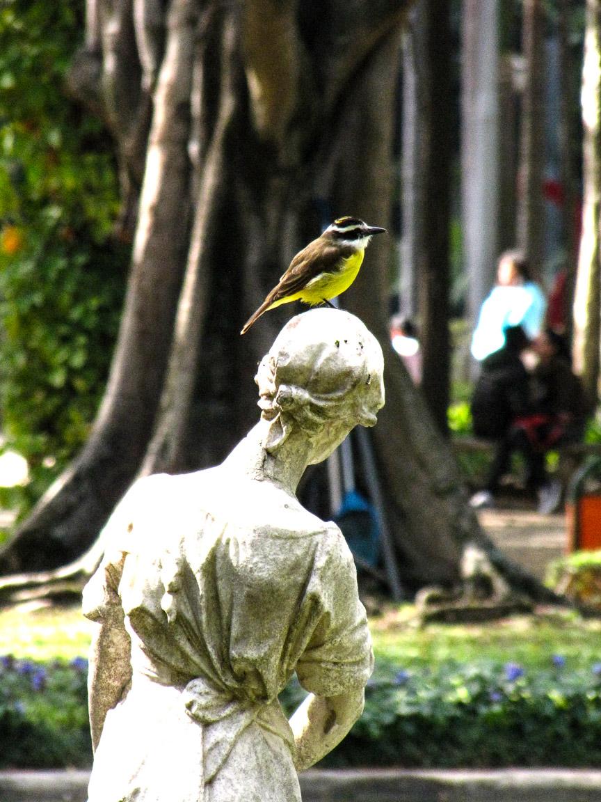 Bem-te-vi. Parque da Luz, SP. Foto: Tietta Pivatto