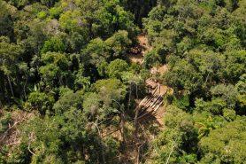 Acima, Ibama flagra desmatamento na Floresta Nacional do Jamari. Foto: Ascom/Ibama.