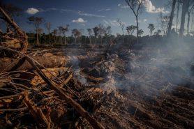 Área recém desmatada ainda queima quando a equipe do IBAMA acha o local. Foto: Marcio Isensee e Sá