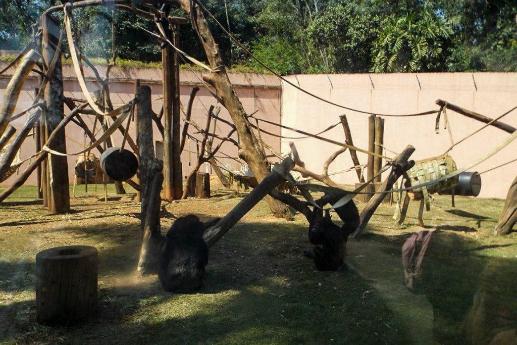 Recinto para chimpanzés no Zoo de São Paulo. Foto: Igor Morais