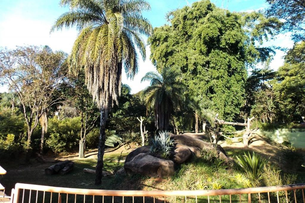 Recinto para gorilas no Zoo de Belo Horizonte. Foto: Igor Morais