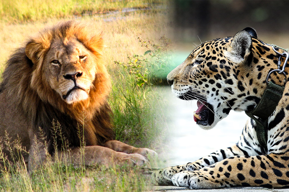 Primo rico, prima pobre: o impacto das mortes de Cecil e Juma