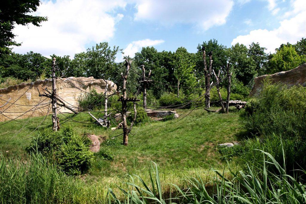 Recinto de Chimpanzés. Pongoland. Zoo Leipzig, Alemanha.
