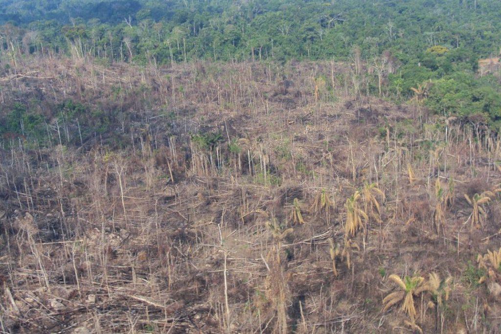 Área devastada pelo esquema comandado por AJ Vilela. Foto: Ibama