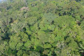 Mais de 11,6 mil espécies de árvores já foram identificadas na Amazônia, mas ainda falta cerca de 4 mil segundo o estudo. Crédito: Nigel Pitman, The Field Museum.