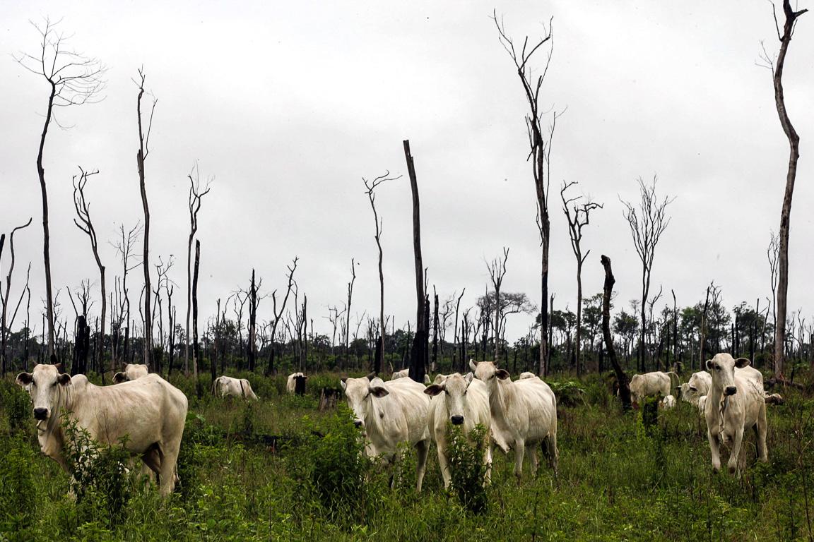 Intensificação da pecuária no Mato Grosso pode liberar 16 milhões de hectares