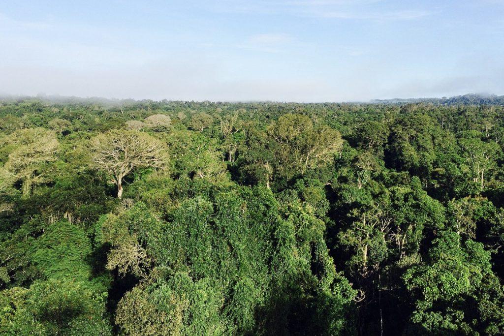 Floresta intacta no norte de Mato Grosso, região de intensa pressão madeireira e de caça. Foto: Claudio Angelo/OC.