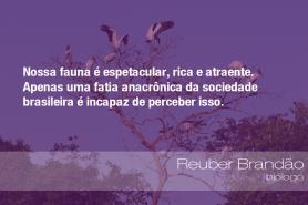 """""""Nossa fauna é espetacular, rica e atraente. Apenas uma fatia anacrônica da sociedade brasileira é incapaz de perceber isso."""" - Reuber Brandão, biólogo"""