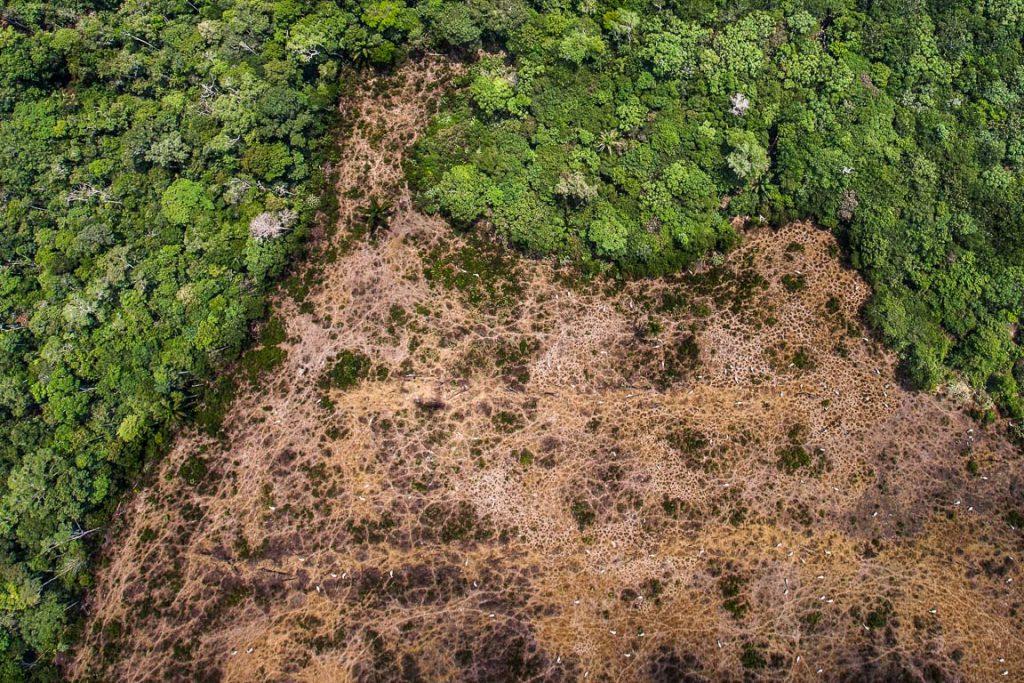 Sobrevoo de monitoramento no norte do estado do Mato Grosso, o Greenpeace identificou propriedades rurais com desmatamento recente, produção de soja e criação de gado em áreas embargadas pela justiça, queimadas florestais, inclusive em terras indígenas, e até extração ilegal de madeira. Foto: ©PauloPereira/GreenPeace