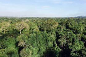 Floresta Amazônica. Foto: Ana Cotta/Flickr.