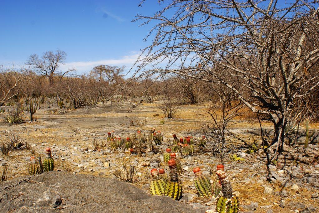 Parque Estadual da Mata Seca, em Minas Gerais. Foto: Pezzini/Divulgação.