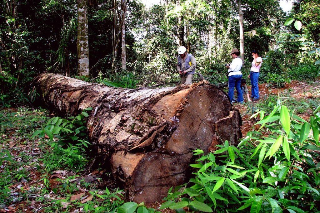 Extração ilegal de madeira na Floresta Amazônica. Foto: Ana Cotta/Flickr.