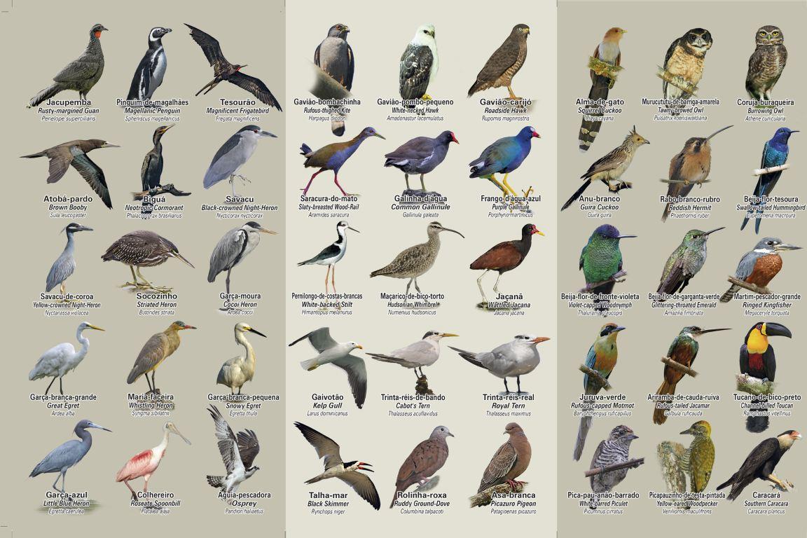 Lançado o Guia de Bolso com aves da cidade maravilhosa
