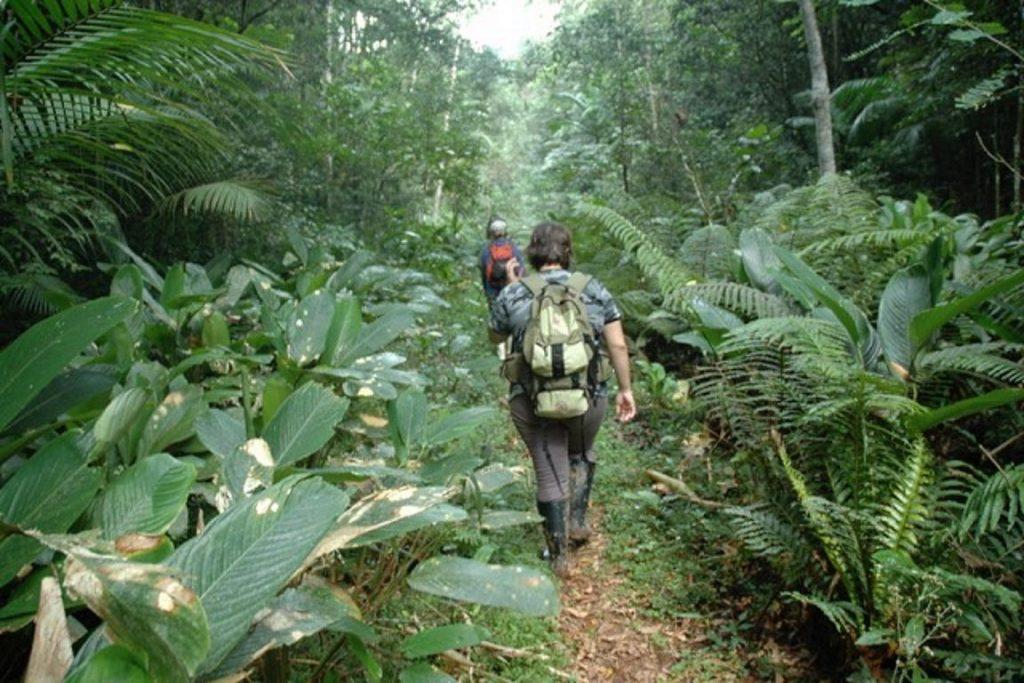 Pesquisadores percorreram 4 mil quilômetros de floresta, em um trabalho que consumiu cinco anos de estudo. Foto: Divulgação.