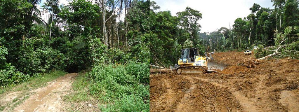 A antiga trilha na floresta e a obra de abertura da estrada. Fonte: News Rondônia