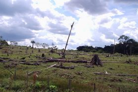Desmatamento na Amazônia. Foto: Daniele Gidsicki/Flickr