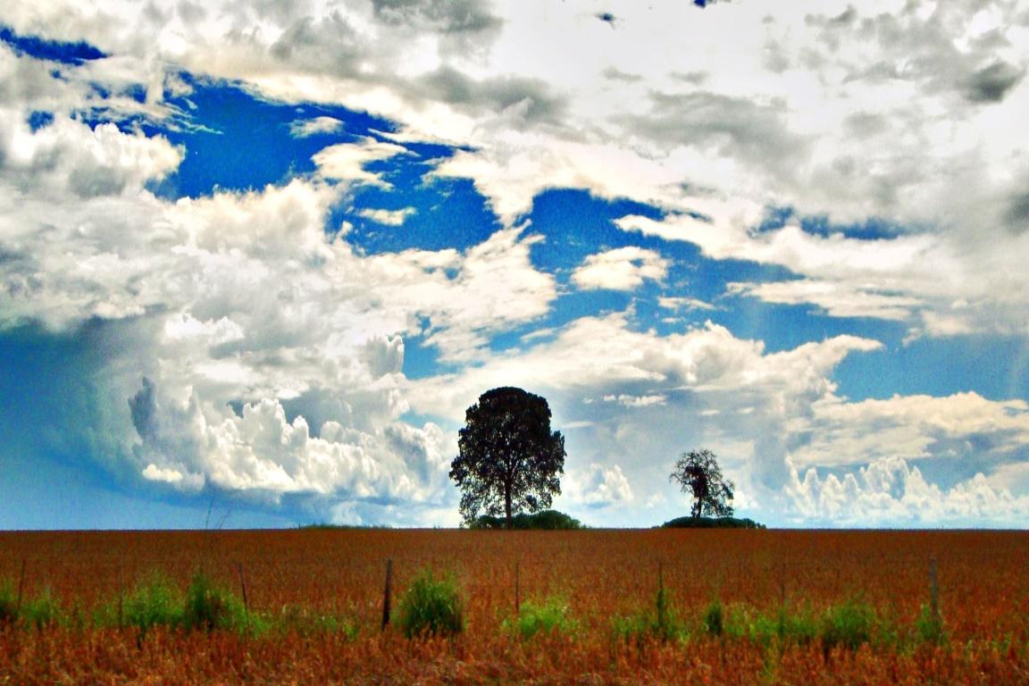 Há quatro anos estamos sem redução na derrubada de árvores na Amazônia. Foto: Victor Camilo/Flickr