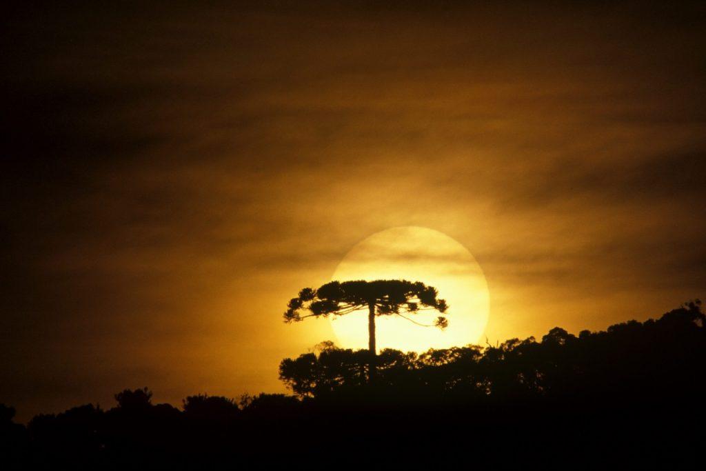 Pôr-do Sol - Telêmaco Borba