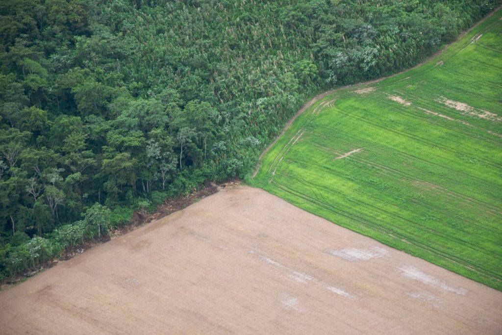 floresta-agricultura