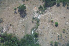 Grileiros transformam floresta em pastagens no Pará. Foto: Ascom Ibama/Arquivo.