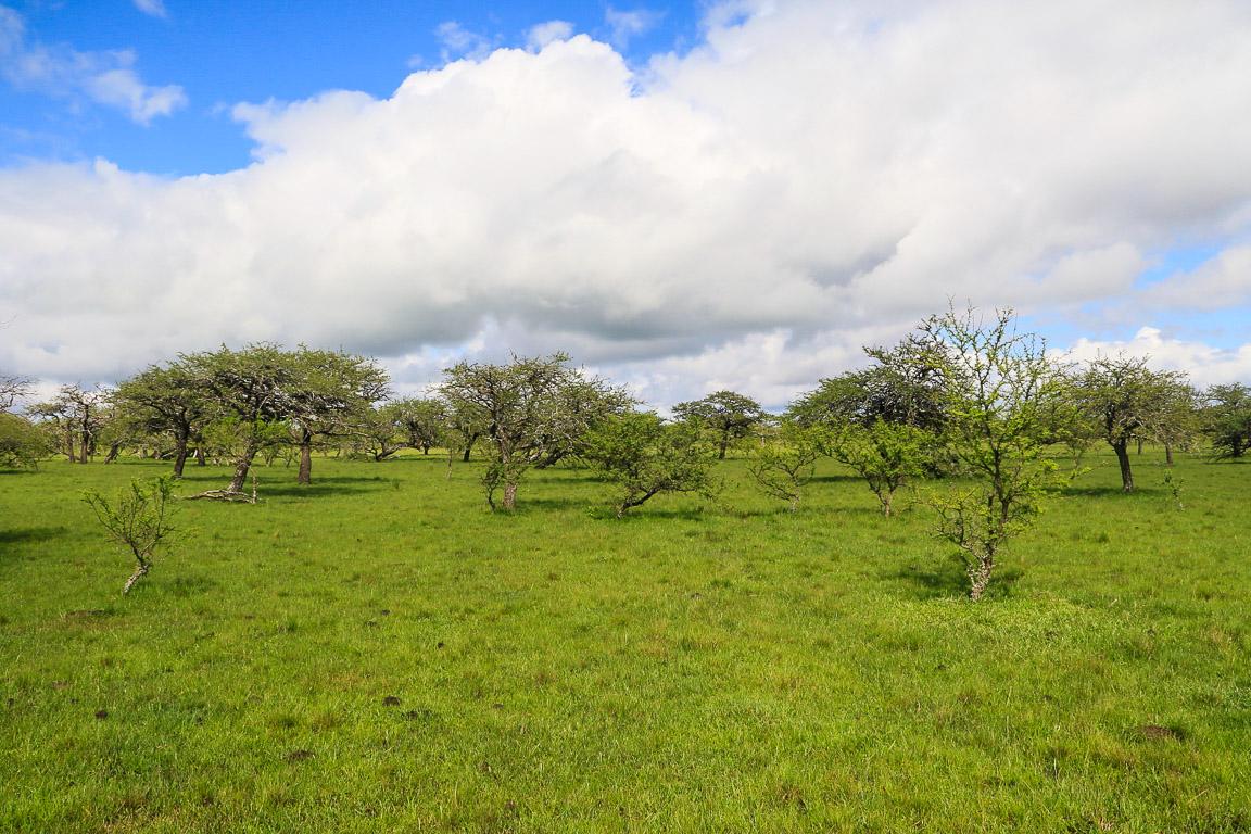 A savana do Parque Estadual do Espinilho em Barra do Quaraí (RS). Foto: Fabio Olmos