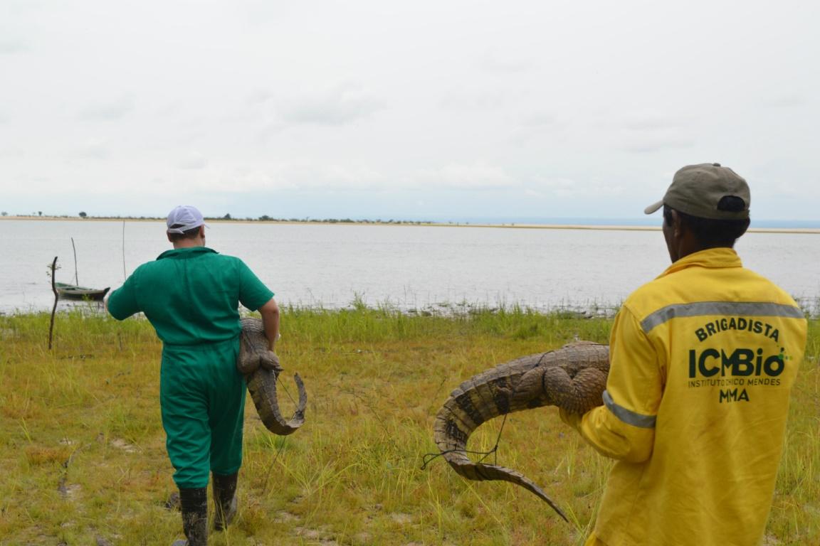 Entidades unidas no empenho de devolver os animais à natureza. Foto: Instituto Mamiraua