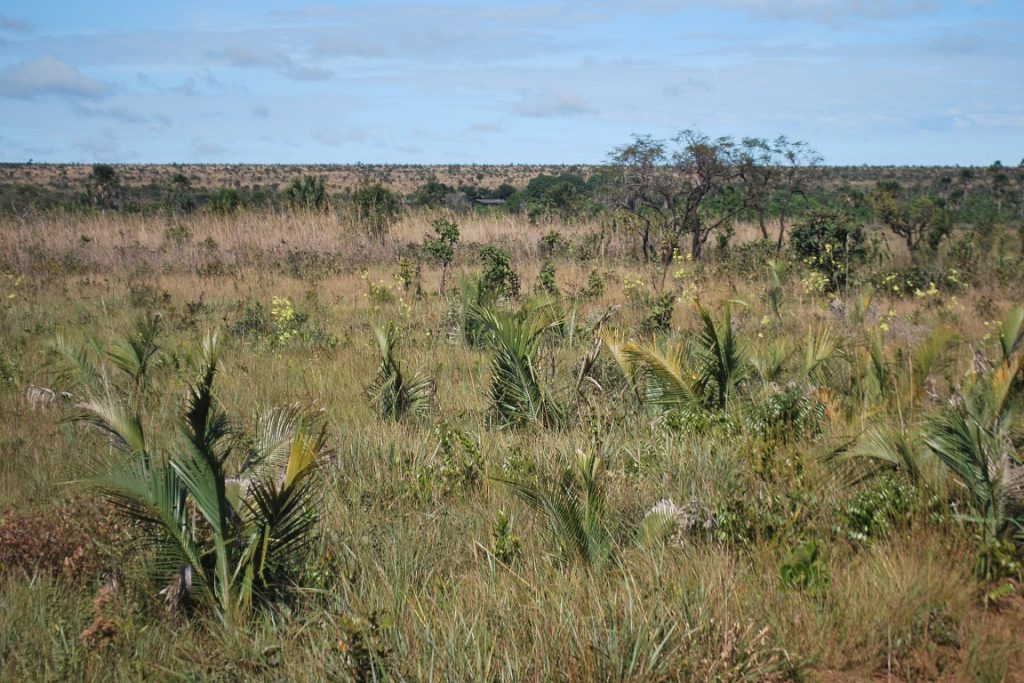 Caso o Parque Nacional das Emas (acima) não existisse, possivelmente quase toda sua extensão hoje em dia seria dominada por imensos campos de soja ou pasto. Foto: Foto: Katia Kopp/Wikiparques.