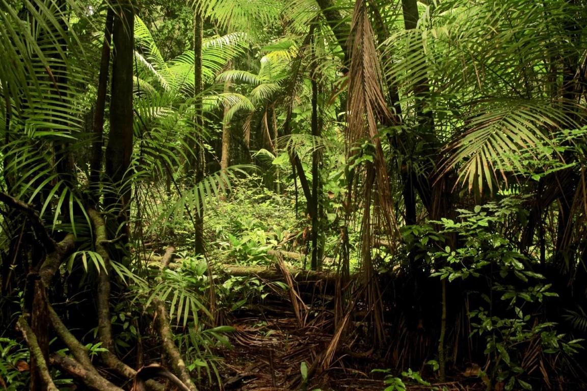 Área afetada pela exploração madeireira: grandes árvores poupadas absorvem carbono mais rápido do que as novas. Foto: Piponiot et al., eLife