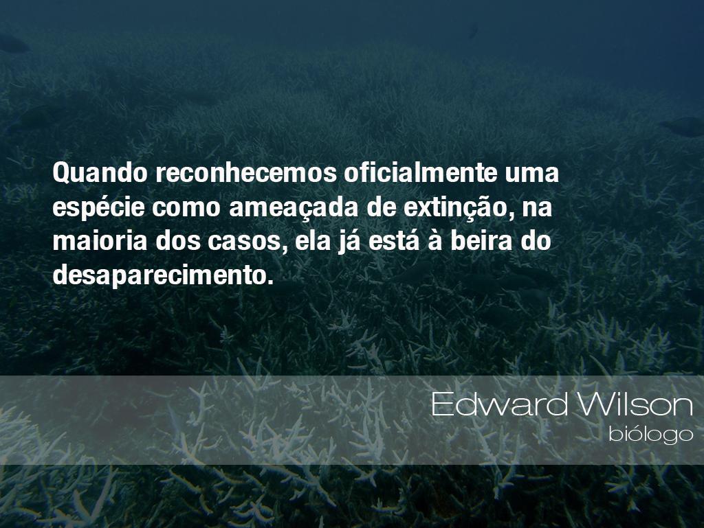 """""""Quando reconhecemos oficialmente uma espécie como ameaçada de extinção, na maioria dos casos, ela já está à beira do desaparecimento."""" -Edward Wilson, biólogo"""