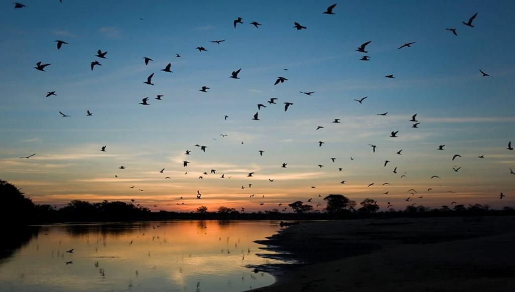 rppn-sesc-pantanal-haroldo_palo_jr