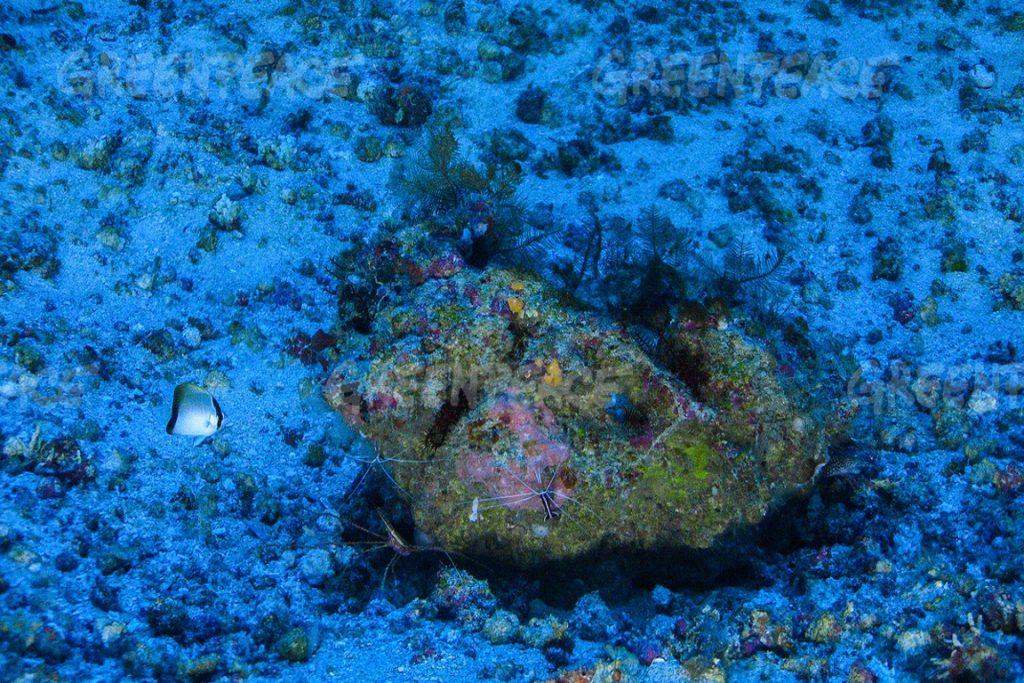 Em 2016, foi descoberto um recife de corais de cerca de mil quilômetros. Foto: ©Greenpeace