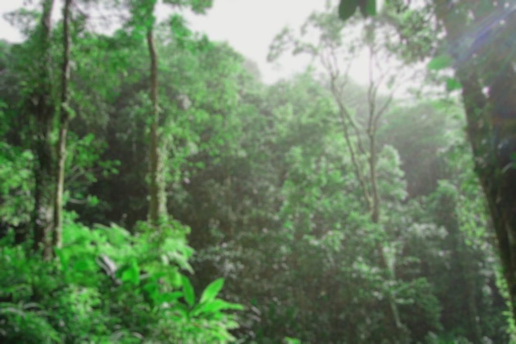 floresta_tropical