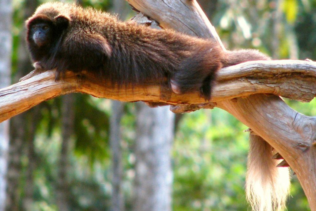 O Zogue-zogues. Foto:Ana_Cotta/Flickr.