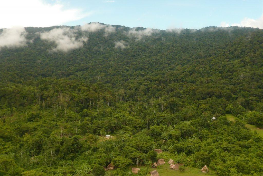 Esta é uma floresta com espécies domesticadas em Jkalo Ijkwala, comunidade Jotï, Venezuela. Crédito: Eglee Zent.