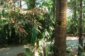 Pegada da Transcarioca que marca a chegada no Parque Lage. Foto: Duda Menegassi.