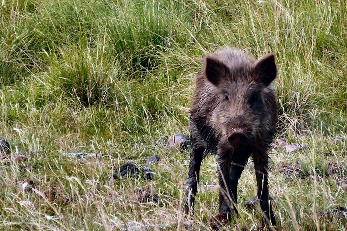 Liberar a caça é também problema de segurança pública