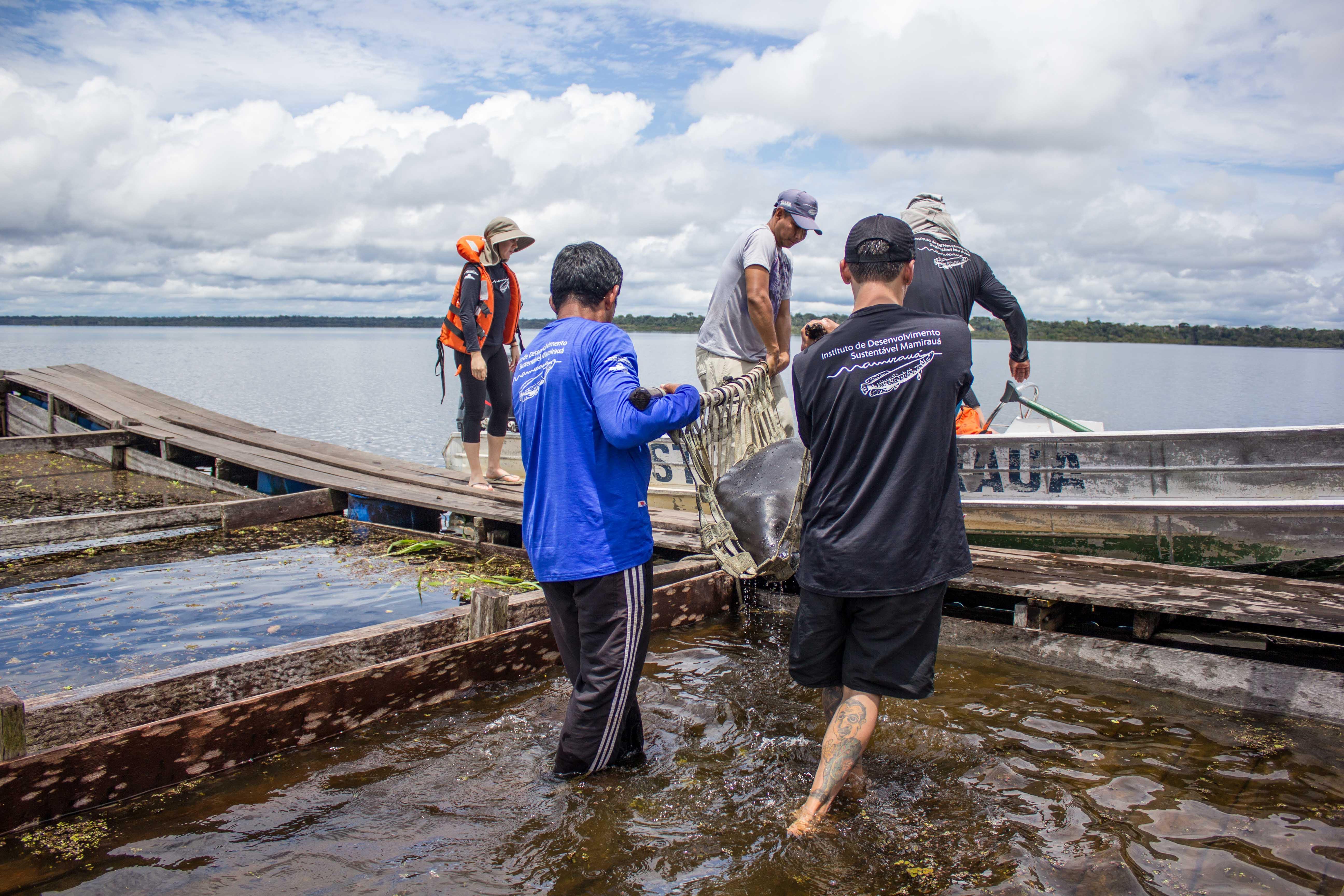 O peixe-boi foi transportado em uma lancha aos cuidados de veterinários até o local da soltura. Foto: Amanda Lelis