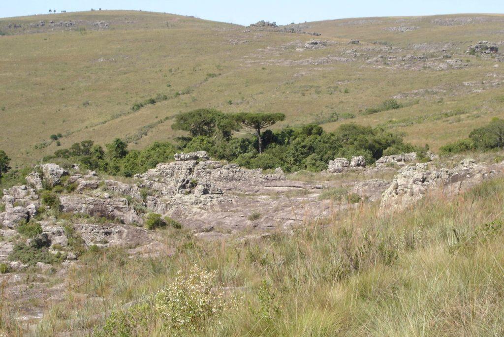Parque Estadual do Guartelá. Foto: Marta Regina Barroto do Carmo.
