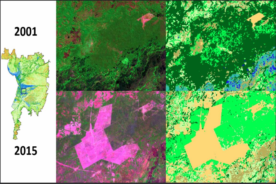 Pantanal/MapBiomas