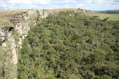 Parque Nacional dos Campos Gerais. Foto de Emerson Oliveira.