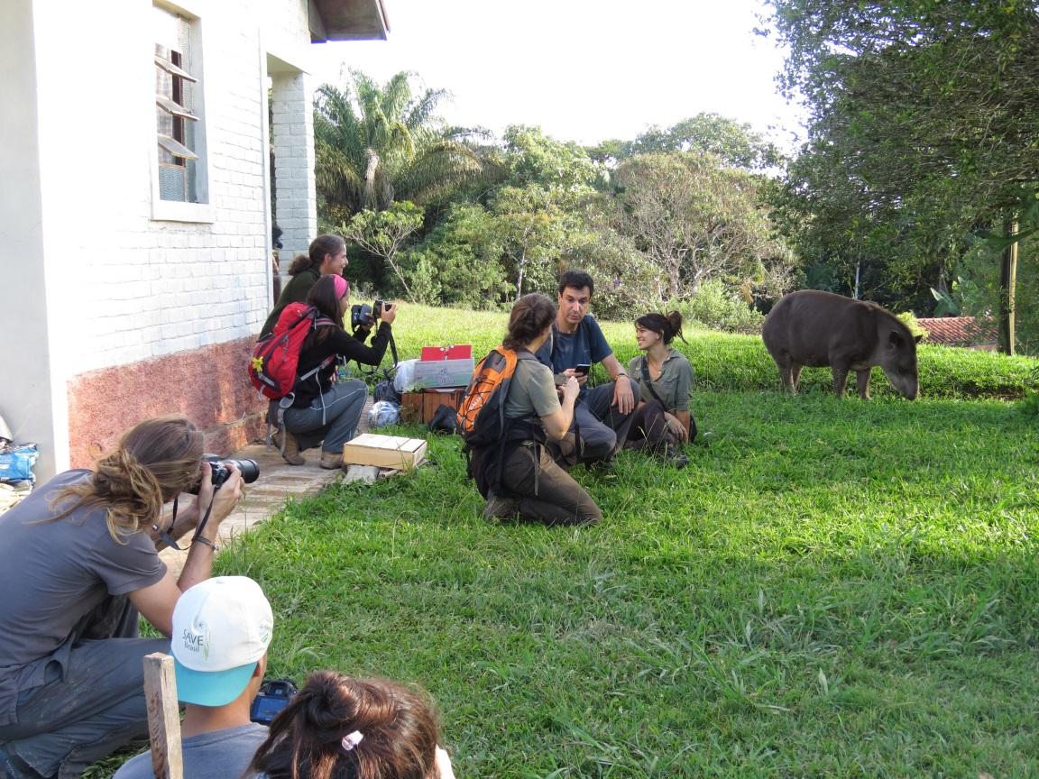 Visitantes do PE Carlos Botelho socializam com uma anta. Coisas maravilhosas acontecem quando a relação com a fauna deixa de ser a tradicional. Foto Fabio Olmos.