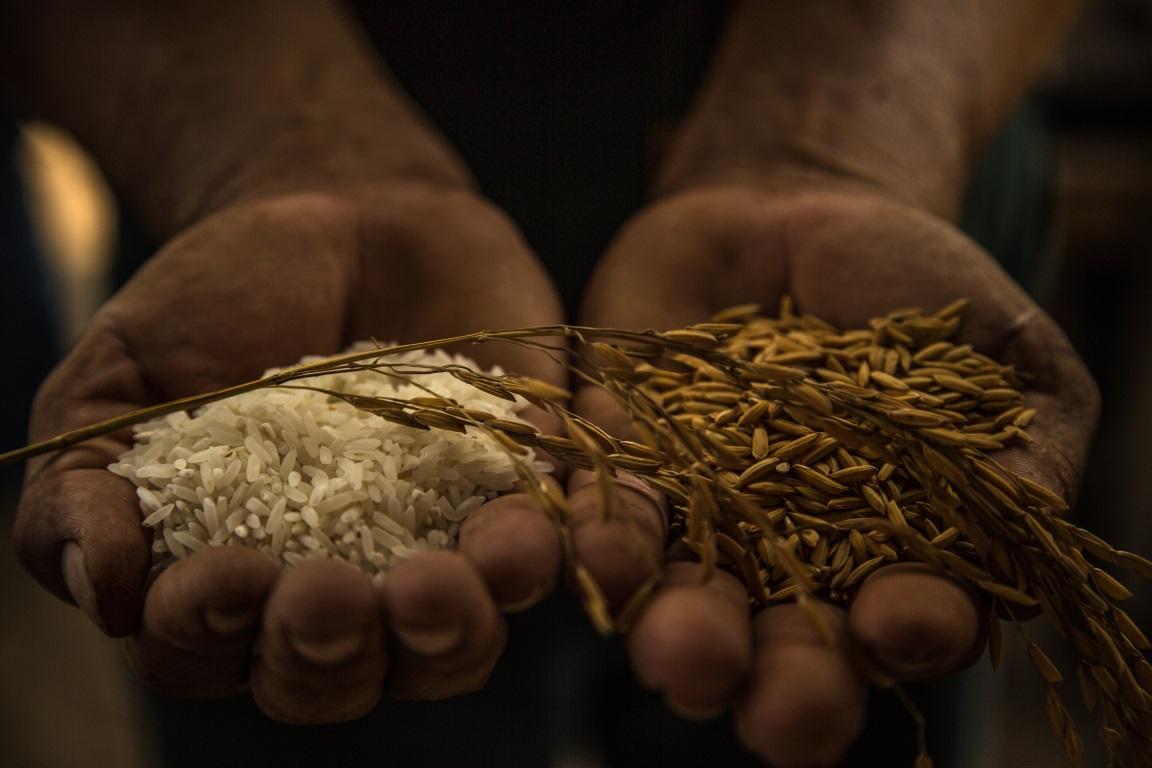 Com práticas sustentáveis, crédito e assistência técnica adequados, Agricultura Familiar pode prosperar em assentamentos e ajudar a reduzir o desmatamento. Foto: Thiago Foresti/IPAM.