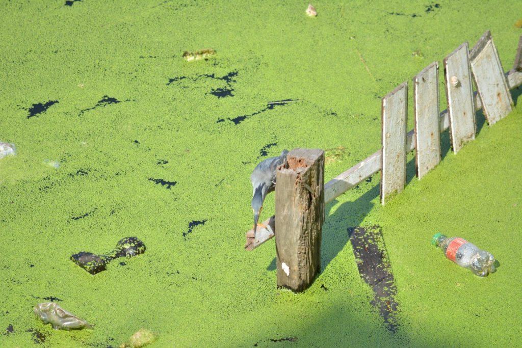 A perda da biodiversidade está relacionada ao crescimento da população humana. Foto: Vandré Fonseca.