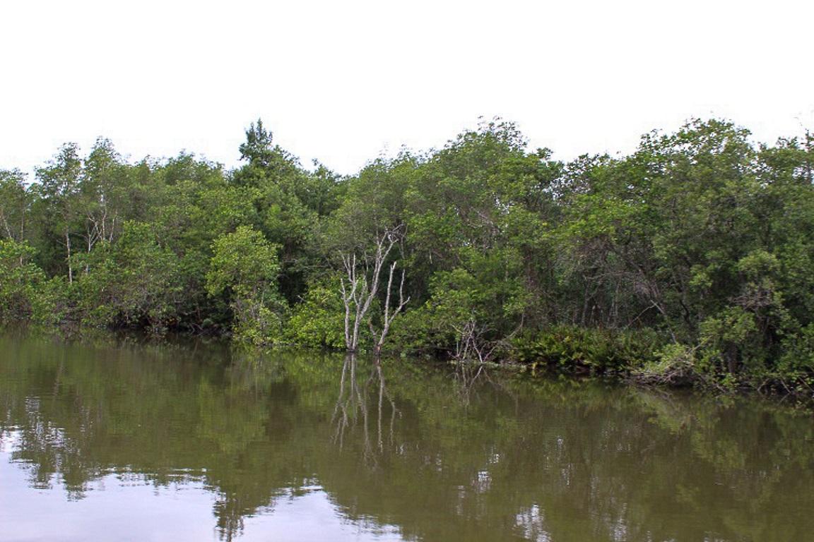 Mangues preservados da Estação Ecológica da Guanabara. Foto: Sabrina Rodrigues.