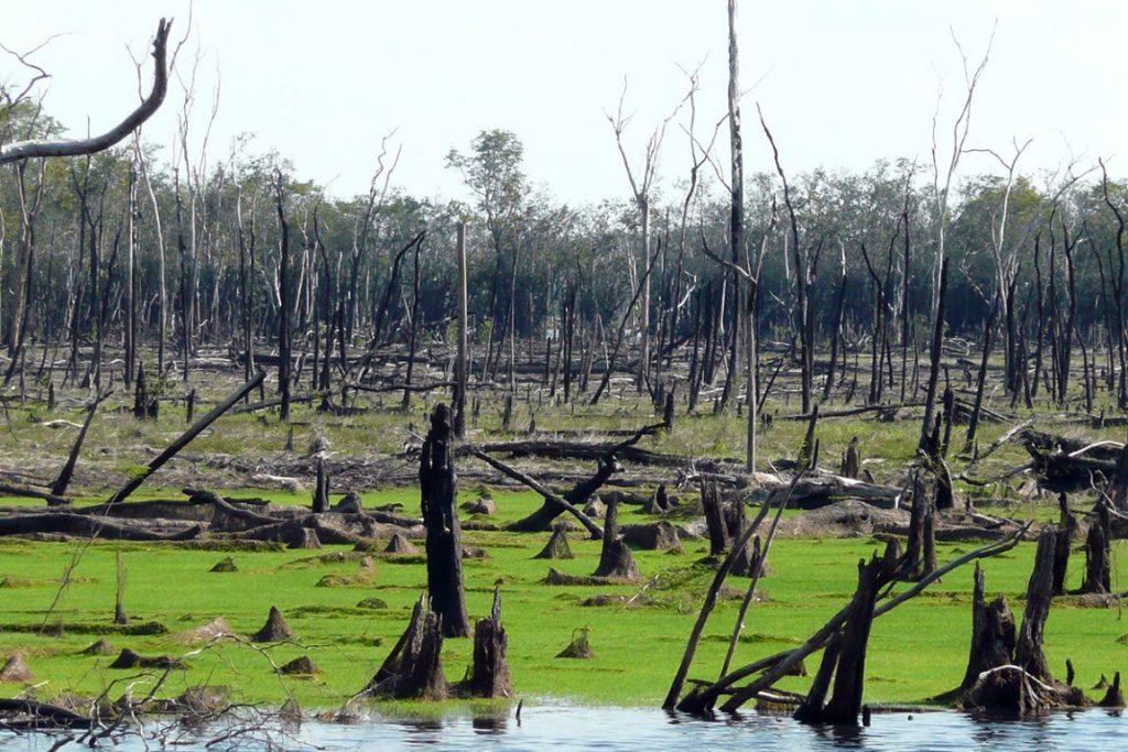Igapós atingidos pelo fogo no Rio Cuiuini, Bacia do Rio Negro, Amazonas. Floresta alagada demora mais para se recuperar após incêndios e permanece mais vulnerável. Crédito: Bernardo Flores.