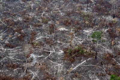 A Floresta Nacional do Bom Futuro sofre sistematicamente com corte de árvores, incêndios e loteamento ilegal. Crédito: © Juvenal Pereira / WWF-Canon