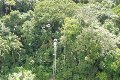 Plataforma permite a observação discreta dos ninhos das Harpias. Foto: Divulgação.