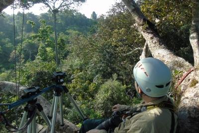 Observação de aves mostra que é possível conservar as harpias e suas matas, ao dar às pessoas novas possibilidades econômicas e um motivo para se importar. Foto: Divulgação.