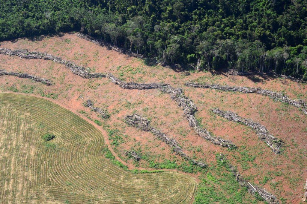 Detecção rápida de desmatamento serve para coibir a destruição da floresta. Foto: Vinícius Mendonça - Ascom/Ibama.
